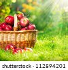 Organic Apples in a Basket outdoor. Orchard. Autumn Garden.Green Grass - stock photo