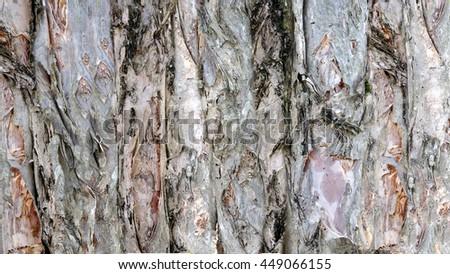 Organic Bark Textures - stock photo