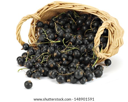 Organic black currant in basket on a white background   - stock photo