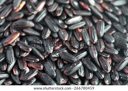 Organic Black Nerone Rice background,  selective focus - some grains in focus, some are not - stock photo