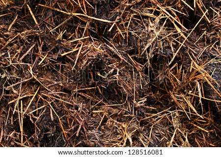 Organic compost texture. - stock photo