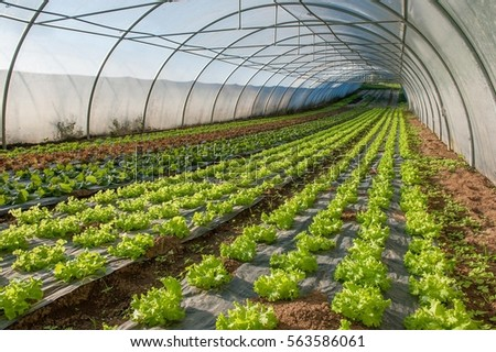 Delightful Organic Cultivation Of Vegetables In Greenhouses