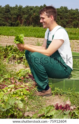 Organic farmer cleaning and sorting beetroots (Beta vulgaris subsp. vulgaris) after the harvest - stock photo