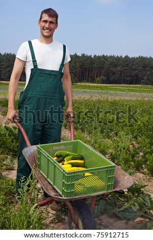 Organic farmer with a wheelbarrow full of courgettes - stock photo