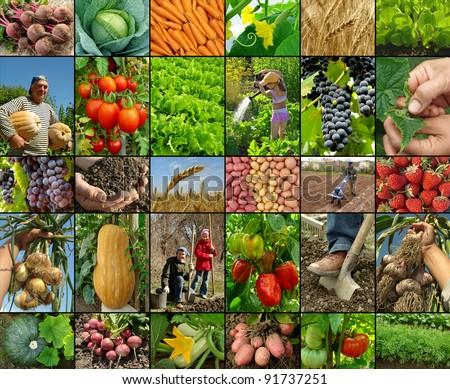 organic farming - stock photo