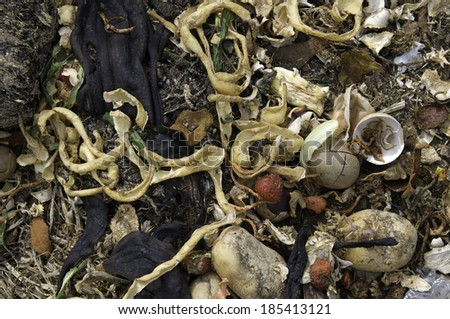 Organic Food Waste - stock photo