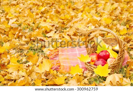 Organic fruits and vegetables in a basket on plaid in autumn park. Fresh pears, apples and pumpkins in a basket on nature. The season of harvest. - stock photo