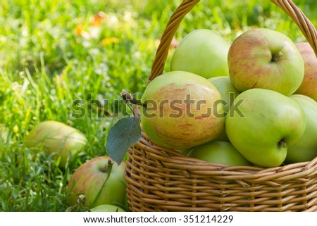Organic green apples in a wicker basket on the green grass in sunny summer day, close-up - stock photo
