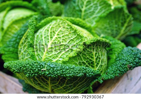 cabbage in french