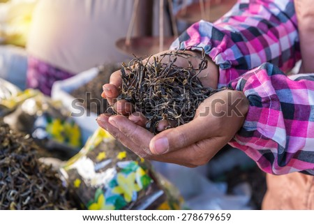 organic green tea dry process after picked on hand in market. - stock photo