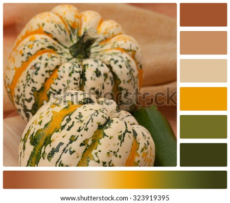 Organic Harlequin Squash. Zucchini. Wooden Board. Palette With Complimentary Colour Swatches. - stock photo