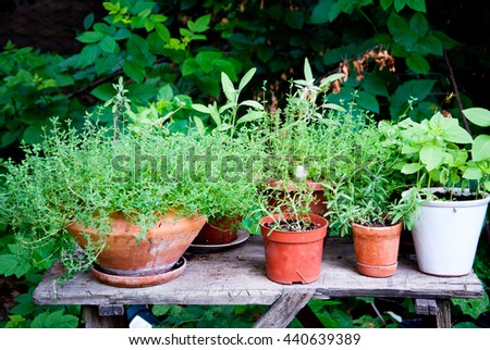 Organic Herb garden in different pots outdoors - stock photo