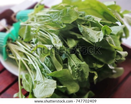 organic hydroponic (rocket salad) full body, healthy concept