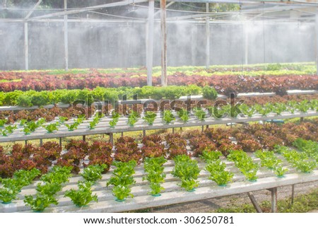 Organic Hydroponic vegetable farm without chemical - stock photo