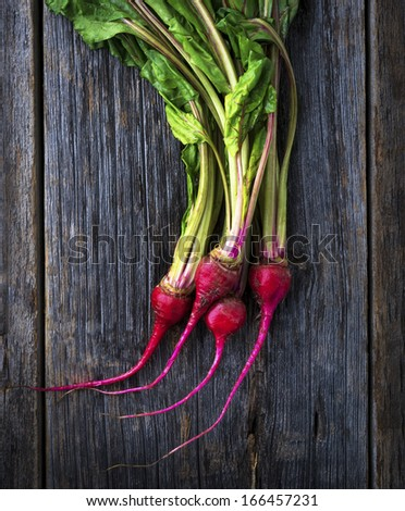 Organic miniature red candy stripe raw beets - stock photo