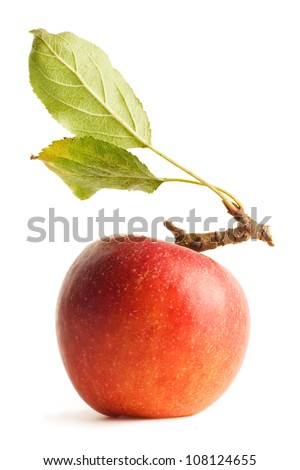 Organic natural home grown red Apple with leaves and stem isolated on a white background with shadow - stock photo