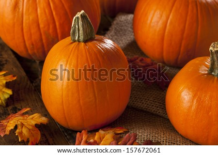 Organic Orange Fall Pie Pumpkins for Halloween