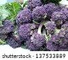 Organic purple sprouting broccoli - stock photo