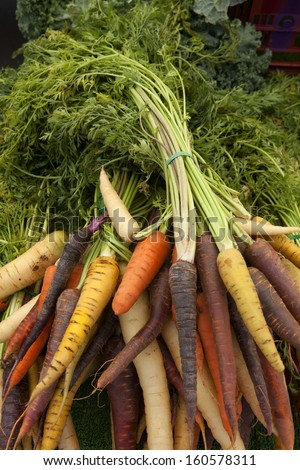 Organic rainbow carrots. Fanned out for display at the farmers' market. Soil and earth still fresh on the root vegetables. - stock photo