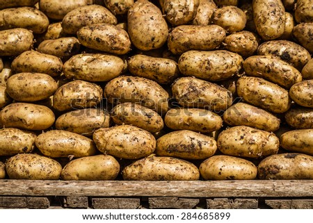 Organic raw potatoes on market for pattern texture or background - stock photo