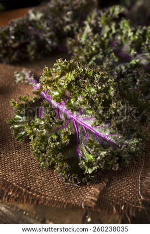Organic Raw Red Kale on a Background - stock photo