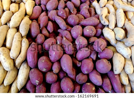 Organic root vegetable display of yams / sweet potatoes. - stock photo
