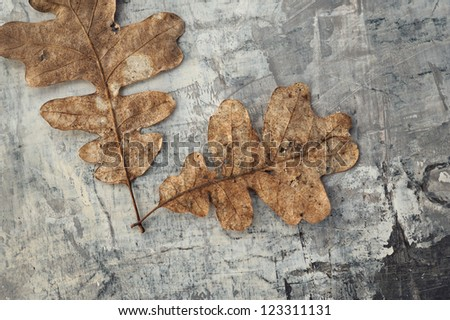 Organic still life photograph of natural objects on textured grey background. - stock photo