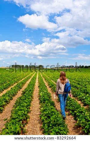 organic strawberries growing on the vine - stock photo