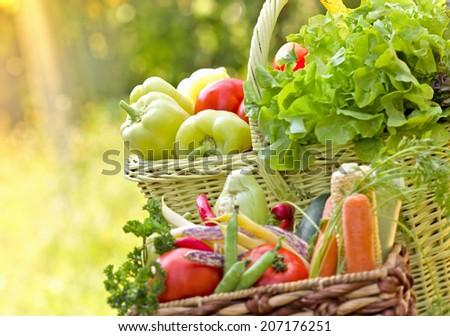 Organic vegetable - stock photo