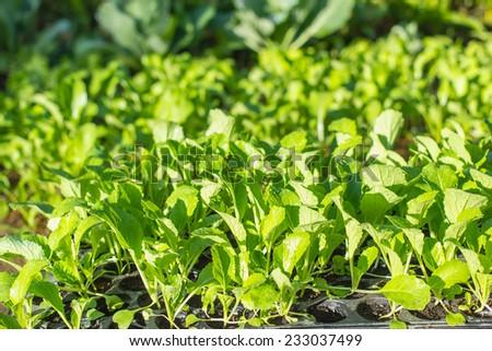 organic vegetable garden  - stock photo