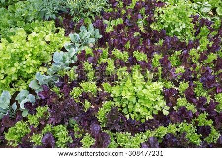 Organic vegetable plots. - stock photo
