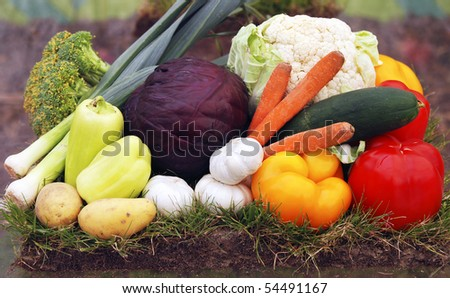Organic vegetables arrangement from a bio-garden - stock photo