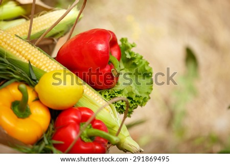 Organic vegetables fresh food, various colorful raw vegetables, Fresh Bio Vegetable in package Over Nature Background, organic corn, pepper and green salad, healthy eating, selective focus - stock photo
