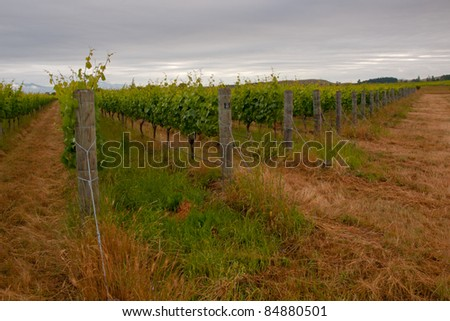 Organic vineyard with clouded sky - stock photo