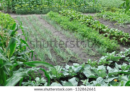 organically cultivated various vegetables in the vegetable garden - stock photo