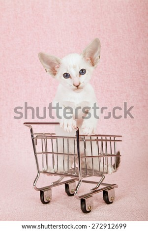 Oriental kitten sitting inside a miniature shopping cart wagon on pink background - stock photo