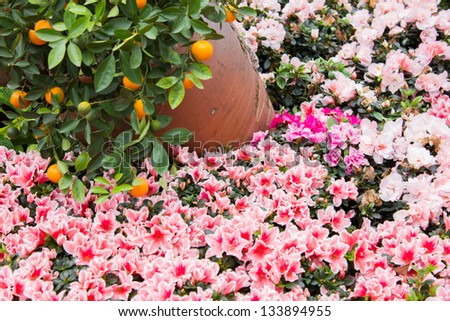 Oriental lilies around Hoan Kiem Lake,hanoi,vietnam - stock photo