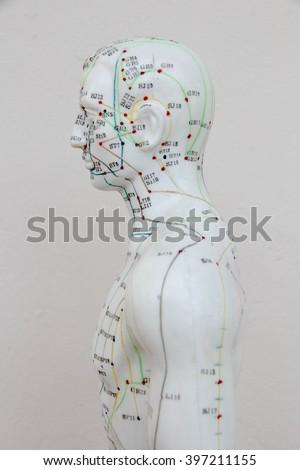 Oriental Medicine model in hospital no. - stock photo