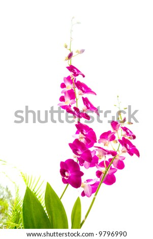 Oriental orchids with broad leaves against some palm fronds in the tropics - stock photo