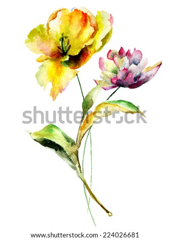 Original watercolor illustration with Tulips and Peony flowers  - stock photo