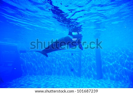 orka, Killer whale - stock photo