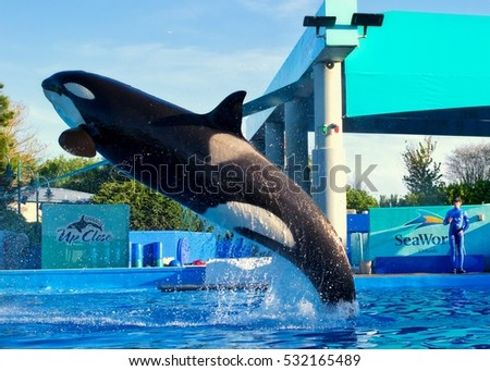 "ORLANDO, USA - MARCH 30: Killer whales in the most popular ""Sea World Orlando Florida Theme Park"" on March 30, 2014 in Orlando, USA"