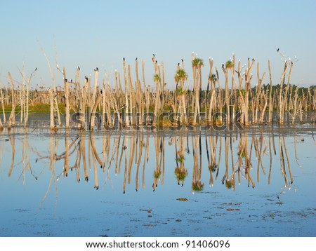 Orlando Wetlands Park Panorama Reflection Travel Birds - stock photo
