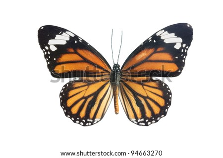 ornage, balck and red butterfly isolated on a whiye background - stock photo