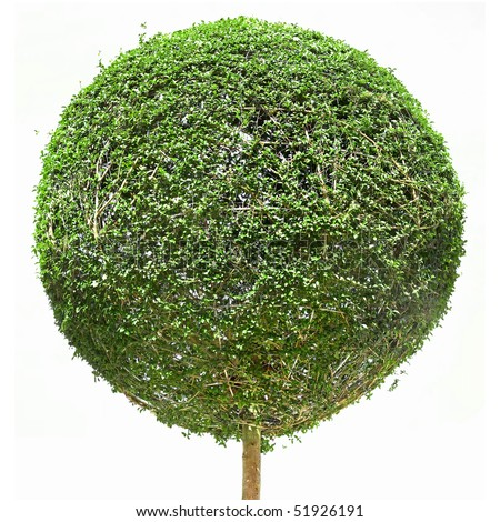 Stock images similar to id 97238039 topiary trees for Small decorative evergreen trees
