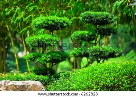 Ornamental Japanese Bonsai like tree in lush gardens - stock photo