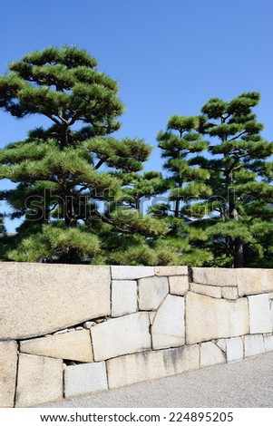 Ornamental Japanese bonsai pine tree with stone wall - stock photo