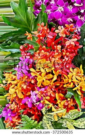 Ornamental orchid, colorful orchid, orchid bouquet, tropical flower, flower backdrop - stock photo