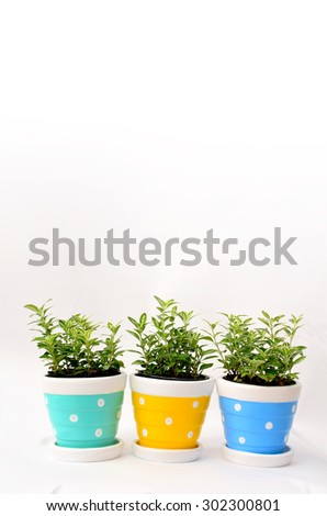 Ornamental plants in vase with copy space for text