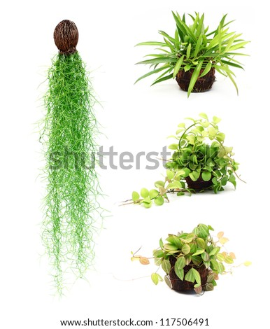 Ornamental plants stock images royalty free images for Design of ornamental plants